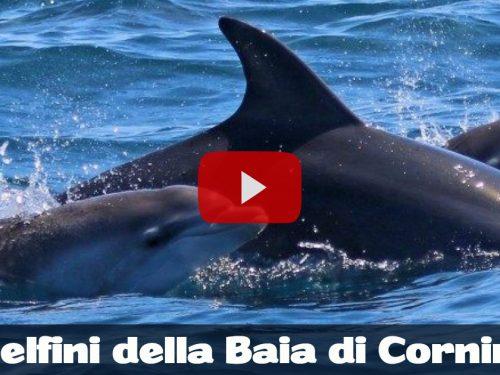 Custonaci. Il video esclusivo di un branco di delfini nelle acque cristalline di baia Cornino.