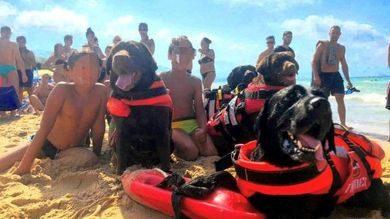 Trapani, tre bambini salvati in mare da Labrador bagnini.