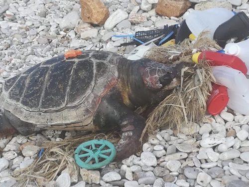 Trovata a San Vito Lo Capo la carcassa di una tartaruga marina intrappolata nella plastica.