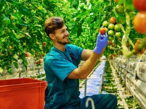 """I giovani Siciliani riscoprono l'agricoltura. """"Non è più il mestiere di chi non ha istruzione"""""""