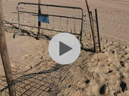 Alcuni giovani vandalizzano il nido di tartaruga Caretta caretta ad Alcamo Marina. VIDEO