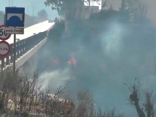 Grosso incendio tra Valderice e Custonaci, in fumo diversi ettari di macchia mediterranea