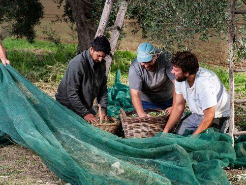 La raccolta delle olive in Sicilia con amici e parenti. Una bella tradizione da conservare e tramandare ai bambini