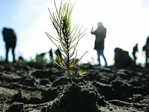 Angelo, il professore che, zappa alla mano, sta ripopolando di alberi il parco di Custonaci