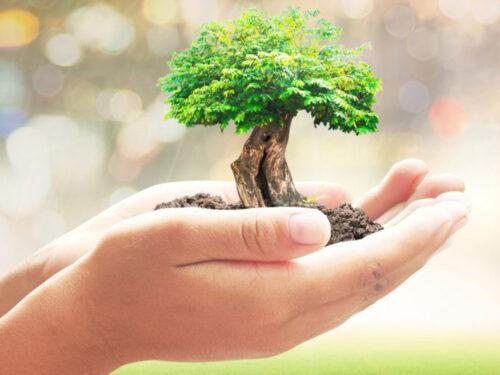 Una diretta Facebook per proporre l'istituzione della figura del Garante del Verde in tutti i comuni